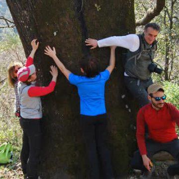 Dieci motivi per piantare un albero (Giornata mondiale delle foreste e dei boschi)